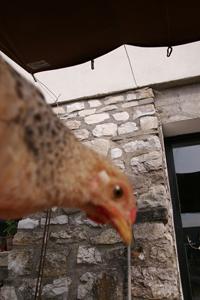 もう鶏と呼んでしまいましょうっ!2010_f0106597_0555157.jpg