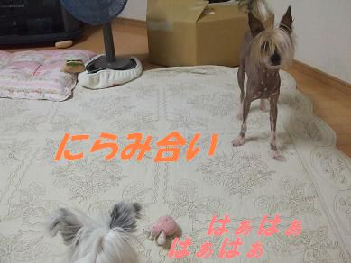 f0179203_15395236.jpg
