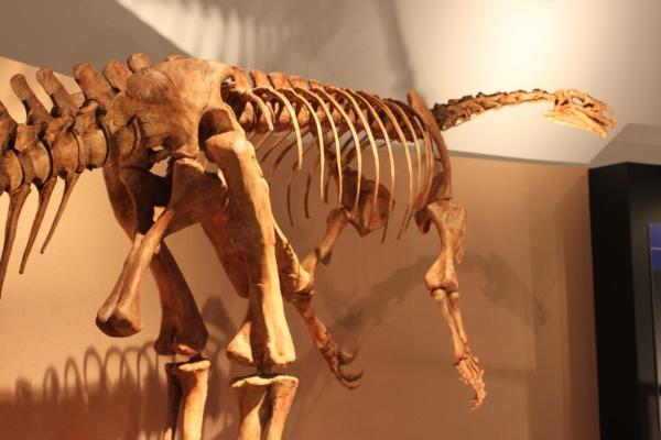 恐竜博物館 開館10周年記念特別展開催!_f0229508_16383534.jpg