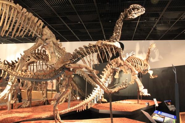 恐竜博物館 開館10周年記念特別展開催!_f0229508_16385069.jpg