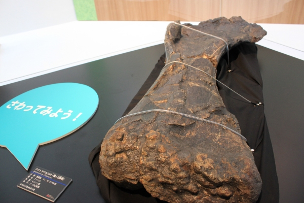 恐竜博物館 開館10周年記念特別展開催!_f0229508_1639479.jpg