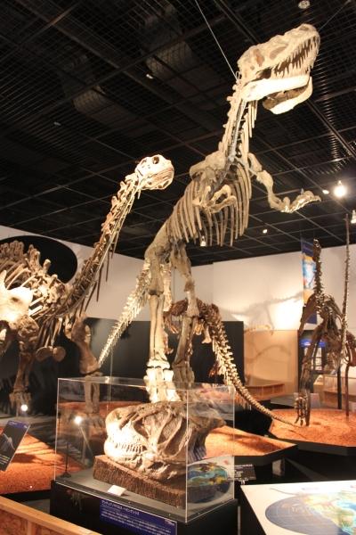 恐竜博物館 開館10周年記念特別展開催!_f0229508_16463984.jpg