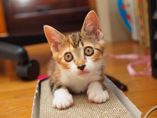 子猫さんその後。その3。_c0136217_3555268.jpg