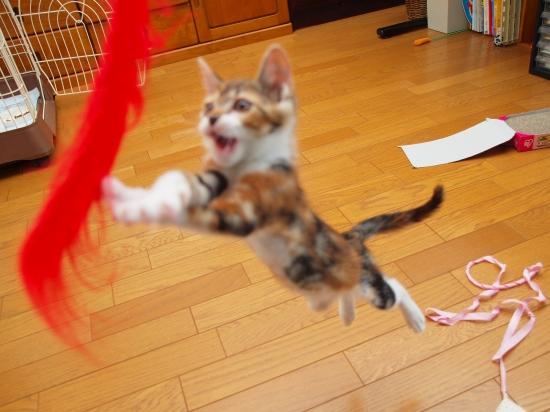 子猫さんその後。その3。_c0136217_3563186.jpg