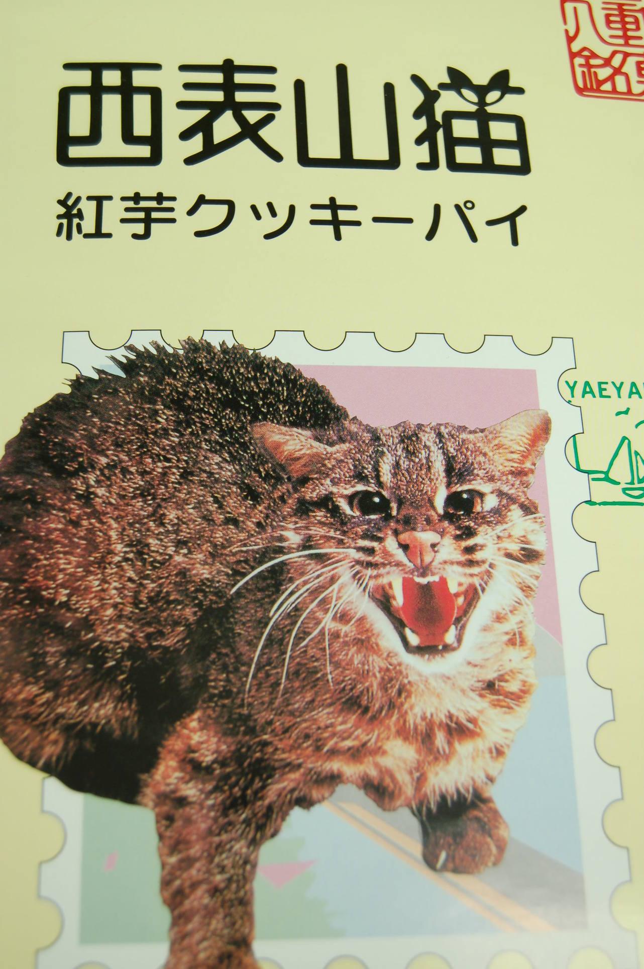 西表山猫_a0019819_18384073.jpg