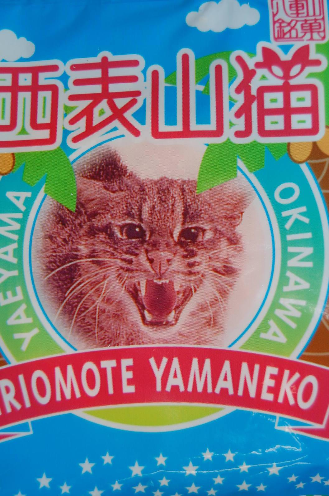 西表山猫_a0019819_18403216.jpg