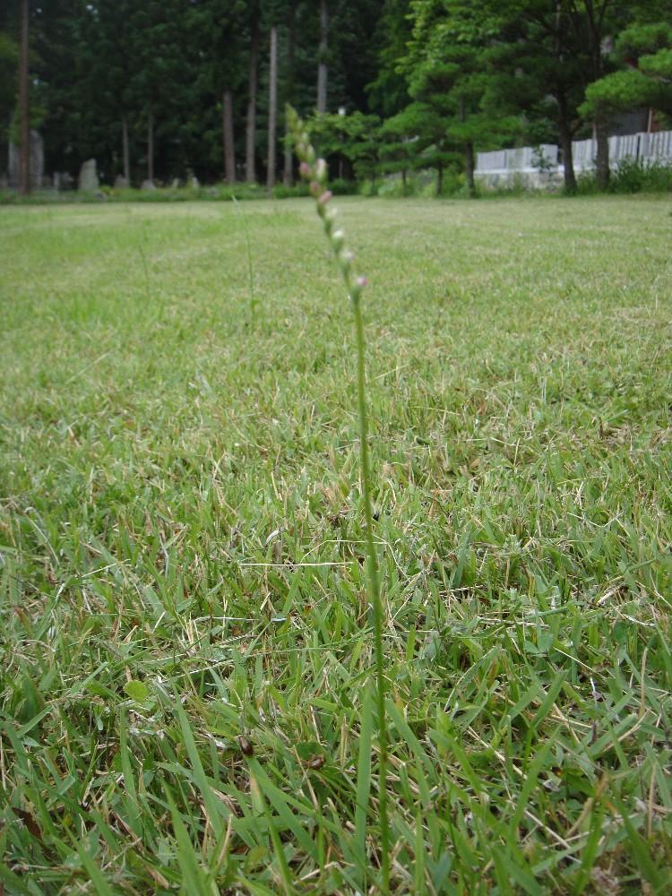草刈り_c0111229_18141215.jpg