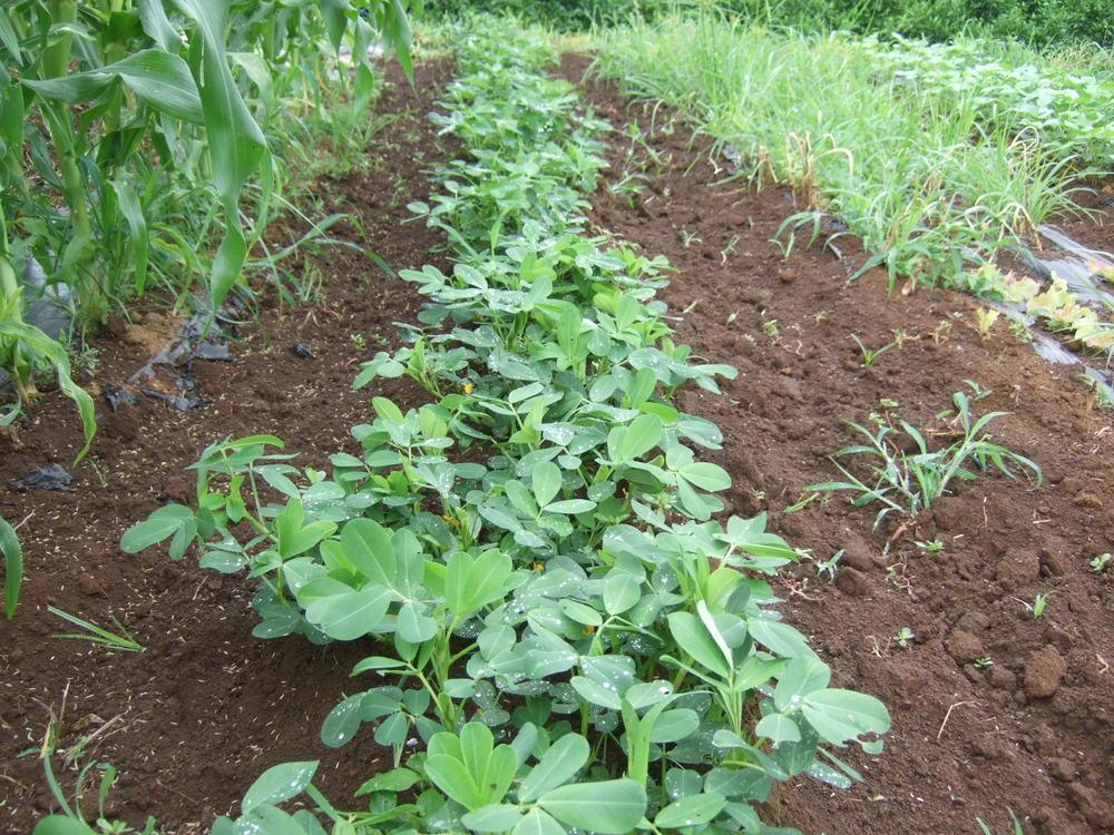 野菜も草も成長....._b0137932_2132779.jpg