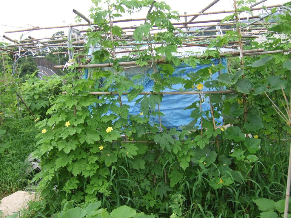 野菜も草も成長....._b0137932_2134877.jpg