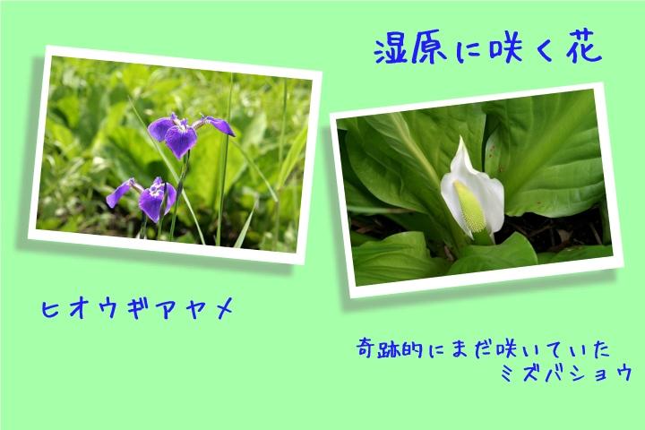 d0012134_13372745.jpg