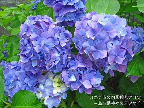 f0105342_1163794.jpg