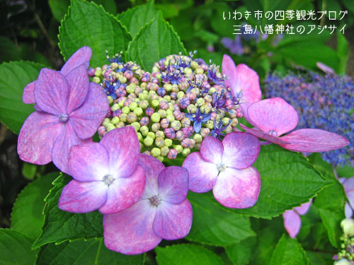 f0105342_117981.jpg