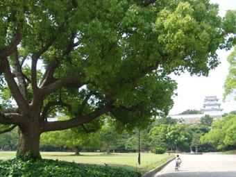 あかし切り絵塾 ~明石公園散策隊~_e0035344_19323331.jpg