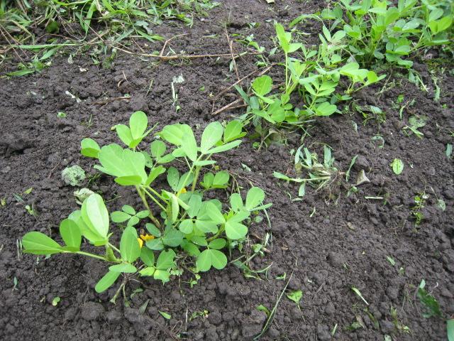 収穫~~_e0121558_21433545.jpg