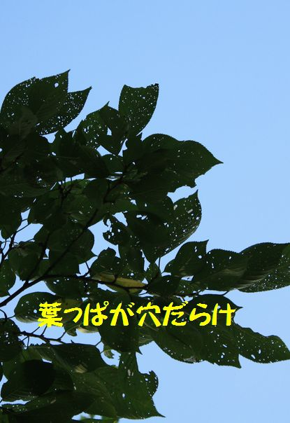 a0100564_2075931.jpg