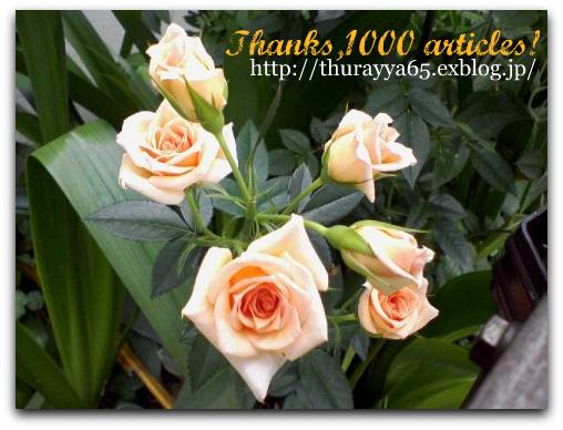 1000の節目に_f0079085_22412959.jpg