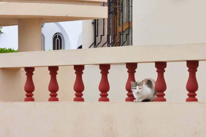 散歩で出逢った猫さん_e0092286_23471427.jpg