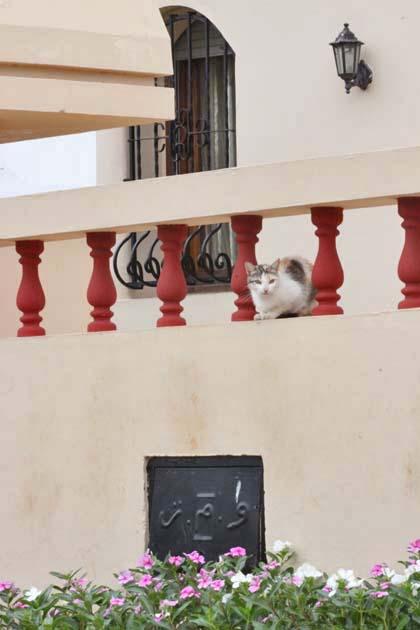 散歩で出逢った猫さん_e0092286_2349655.jpg