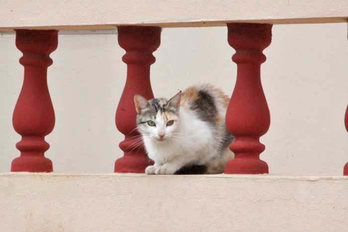 散歩で出逢った猫さん_e0092286_23505937.jpg