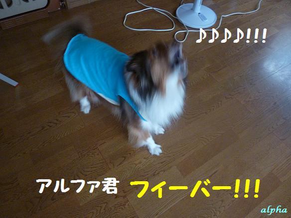 c0189388_1512570.jpg