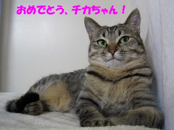 第8回 ちばわん 「ねこ親会(in 品川)」のご報告_d0027698_1623326.jpg