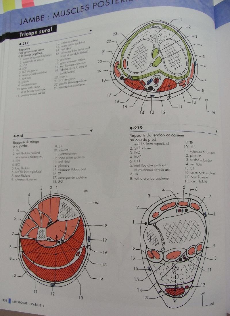 解剖学の参考書_c0202508_261831.jpg