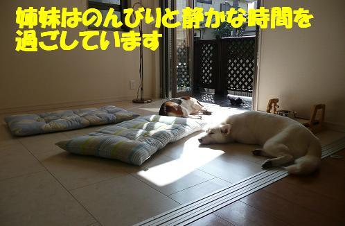 f0121712_138060.jpg