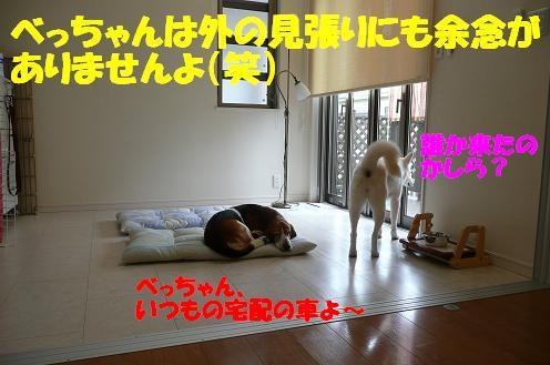 f0121712_138915.jpg