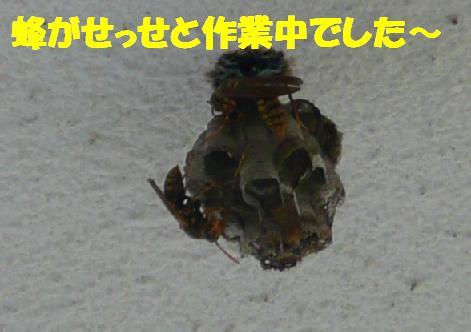 f0121712_1543191.jpg