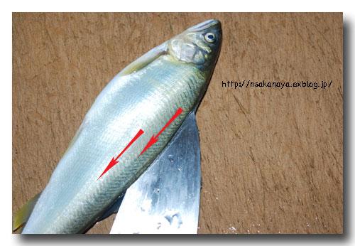 川魚の背開き/捌き方 ............ 虹鱒や鮎・ヤマメやイワナなどの捌き方_d0069838_1221737.jpg