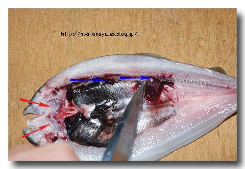 川魚の背開き/捌き方 ............ 虹鱒や鮎・ヤマメやイワナなどの捌き方_d0069838_1223476.jpg