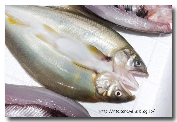 川魚の背開き/捌き方 ............ 虹鱒や鮎・ヤマメやイワナなどの捌き方_d0069838_12242054.jpg