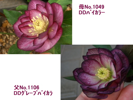 c0025140_1046110.jpg