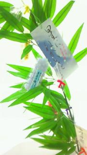 野川日記 8_c0157242_6105382.jpg