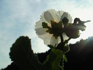 2010.7.10 晴れ_e0041566_23462065.jpg