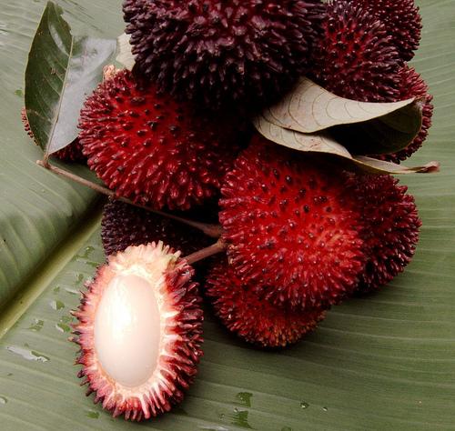 プラサン(pulasan, Nephelium mutabile)の果実