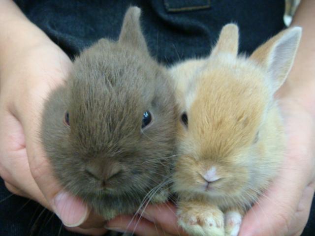 ウサギ・インコ_f0189122_11315685.jpg