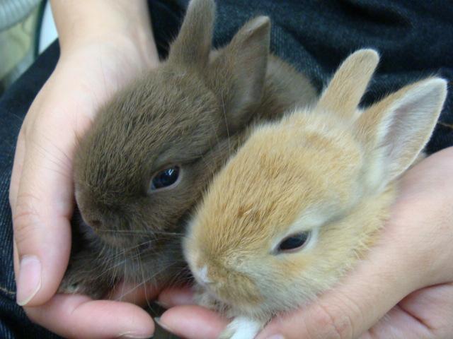 ウサギ・インコ_f0189122_1132767.jpg