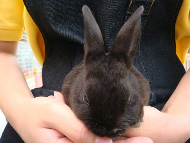 ウサギ・インコ_f0189122_11342294.jpg
