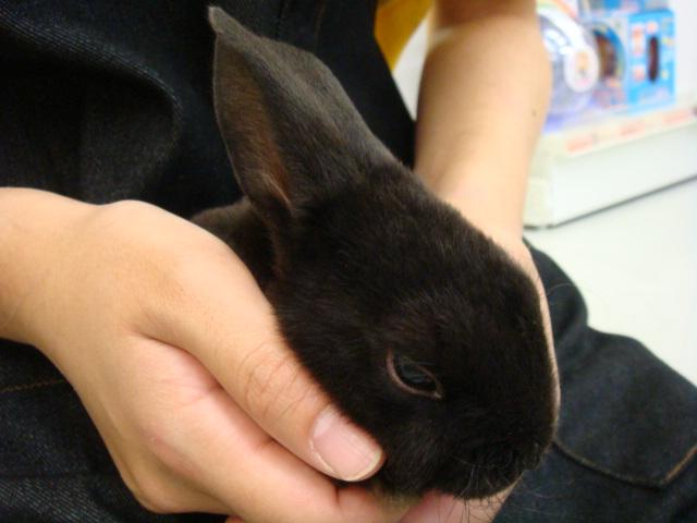 ウサギ・インコ_f0189122_11343230.jpg