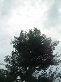 d0165527_13342438.jpg