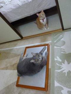 猫のお友だち ちぃちゃんあずきちゃんちょびくんまろくん編。_a0143140_21435185.jpg