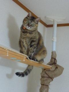 猫のお友だち ちぃちゃんあずきちゃんちょびくんまろくん編。_a0143140_21445858.jpg