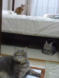 猫のお友だち ちぃちゃんあずきちゃんちょびくんまろくん編。_a0143140_21452961.jpg