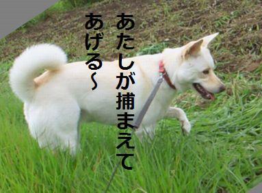 f0195543_12293275.jpg