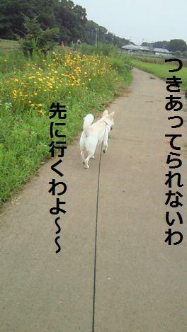 f0195543_12324684.jpg