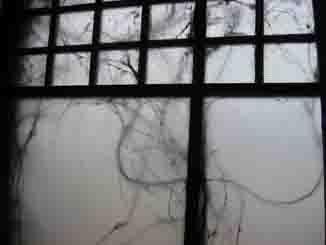 曇りガラス_d0023170_18515987.jpg