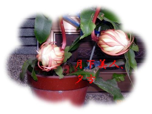 d0007475_1059591.jpg