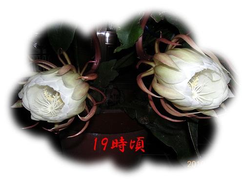 d0007475_1104276.jpg