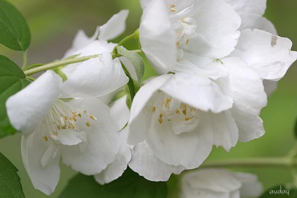 沢山の花が咲いてきて嬉しい季節♪_c0048494_9511758.jpg